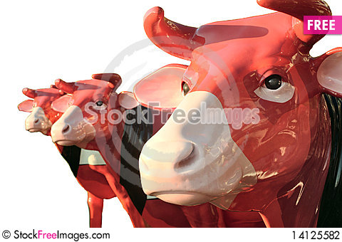 Free 3 Cows - Bull, Bullock,oxen, Ox Stock Photography - 14125582