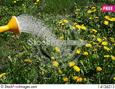 Free Irrigation Water From A Watering Can Flower Stock Photos - 14126213