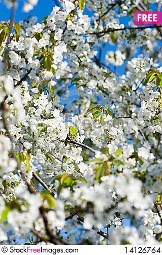 Free Blossoming Garden Stock Images - 14126764