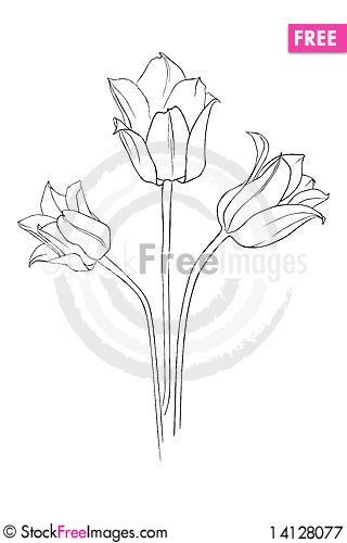 Free Tulips Royalty Free Stock Photography - 14128077