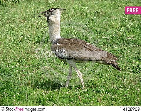 Free Bird (Ngorongoro, Tanzania) Royalty Free Stock Images - 14128909