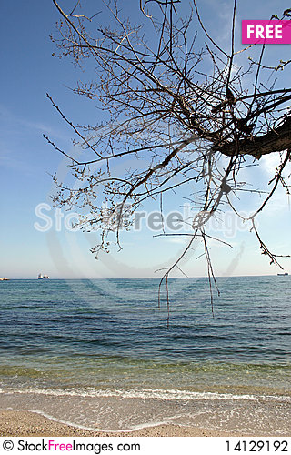Free Sunny Beach With A Tree Stock Photography - 14129192