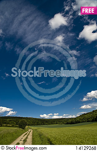 Free Track Through A Wheat Field Royalty Free Stock Photos - 14129268