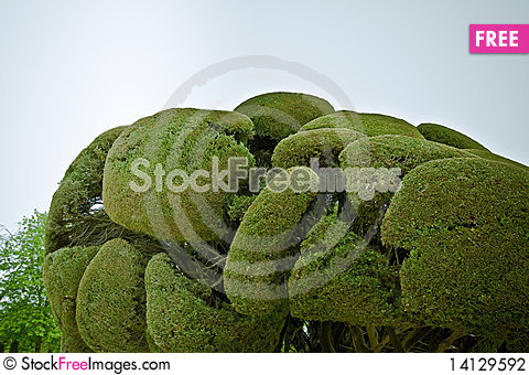 Free Trees In Park Stock Photography - 14129592
