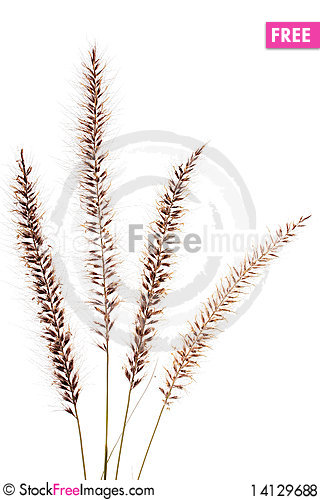 Free Dried Up Grass Royalty Free Stock Photos - 14129688
