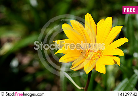 Free Yellow Flower Stock Photography - 14129742