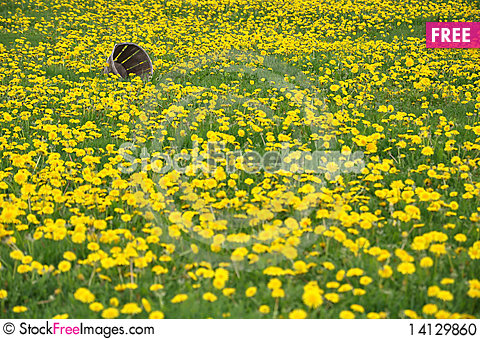 Free Field Of Dandelions With An Old Basket Stock Photo - 14129860