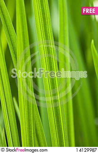 Free Green Leaves Royalty Free Stock Photography - 14129987
