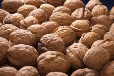 Free Dispersal Many Walnuts Royalty Free Stock Image - 14121556