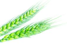 Free Wheat Ears Royalty Free Stock Photography - 14121827