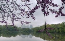 Spring In Central Park Royalty Free Stock Photography