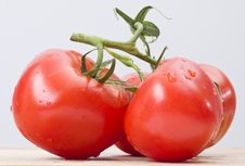 Free Fresh Tomatoes Royalty Free Stock Image - 14122616