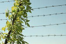 Free Spring. Royalty Free Stock Image - 14122816