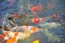 Free Fish Stock Photo - 14122950