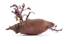 Free Red Potato Royalty Free Stock Photos - 14123298