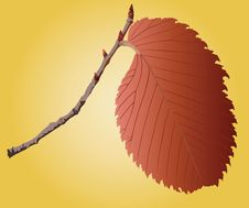 Free Leave On A Sprig Stock Photography - 14123642