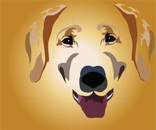 Muzzle Of Dog Stock Photo