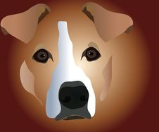 Free Muzzle Of Dog Royalty Free Stock Photos - 14123738