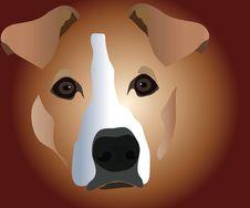 Muzzle Of Dog Royalty Free Stock Photos
