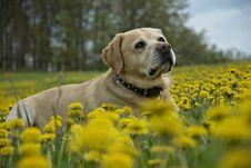 Free Spring Meadow Royalty Free Stock Photos - 14124728