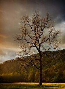 Single Walnut Tree In The Meadow Royalty Free Stock Photos