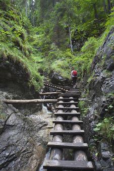 Free Tourist Girl Walking Through The Mountain Forest Royalty Free Stock Photo - 14125045