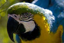 Colourful Ara Stock Photo