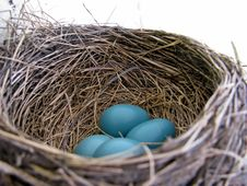 Free Robins Eggs Stock Image - 14126301