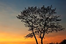 Tree Silhouette At Sunset. Stock Images