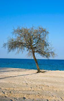 Free Lonely Tree Stock Photo - 14126610