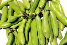 Free Fava Or Broad Beans Royalty Free Stock Image - 14127596