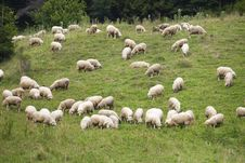 Free Pack Of Sheeps On The Grass Stock Images - 14127954
