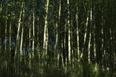 Free Green Forest Stock Images - 14128704
