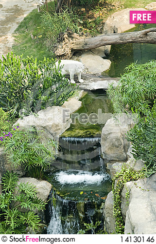 Free A White Tiger  In The Zoo Royalty Free Stock Image - 14130146