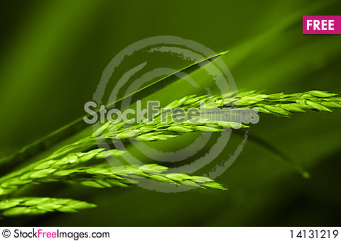 Free Background With A Plant Royalty Free Stock Images - 14131219