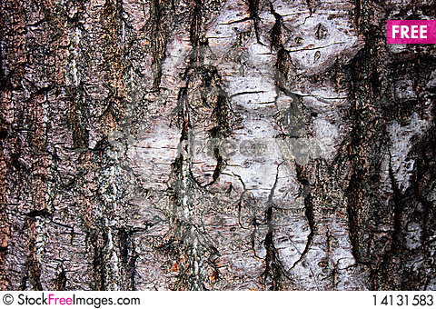 The bark of the birch Stock Photo