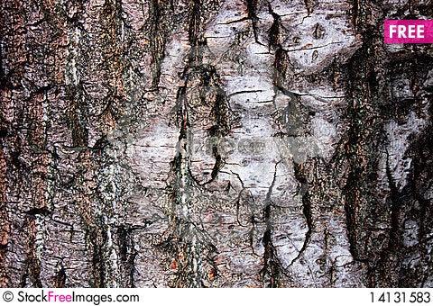 Free The Bark Of The Birch Stock Photos - 14131583