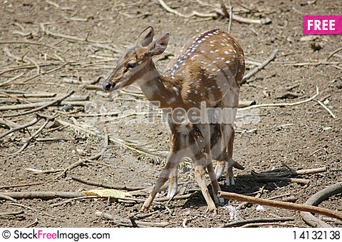 Free Deer And Fawn Royalty Free Stock Photos - 14132138