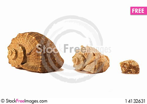 Free Shells 2881 Stock Image - 14132631