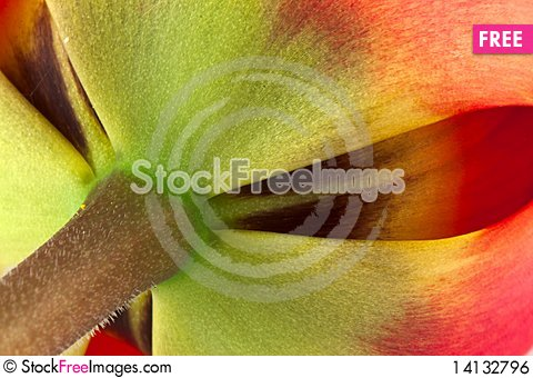 Free Tulip Royalty Free Stock Image - 14132796