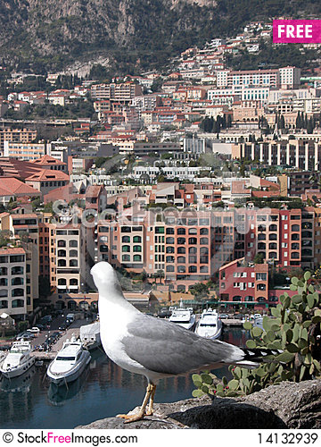Seagull above harbour at Monte Carlo Stock Photo