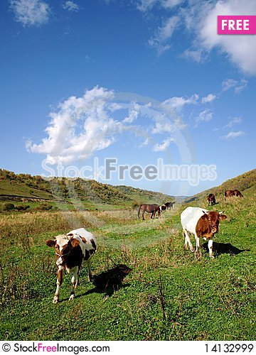 Free Horses And Cattle Grazing With The Royalty Free Stock Images - 14132999