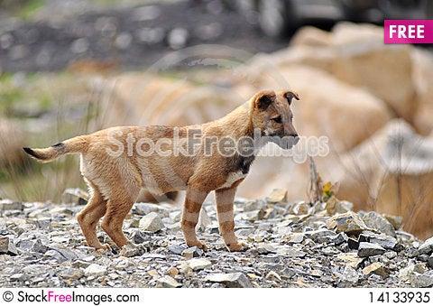 Free Dog Royalty Free Stock Photo - 14133935