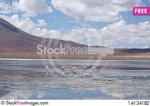 Free Flamingos Stock Photography - 14134182