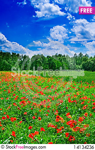 Free Field Full Of Red Poppies Royalty Free Stock Image - 14134236