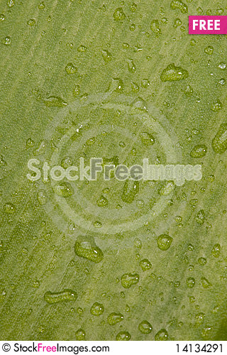 Free Water Drops Stock Image - 14134291