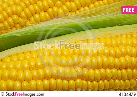 Free Close Up Of Corn Cobs Royalty Free Stock Images - 14134479