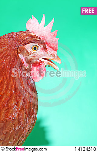 Free Brown Hen On The Green Stock Photo - 14134510