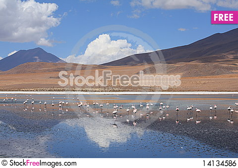 Free Flamingos Royalty Free Stock Image - 14134586