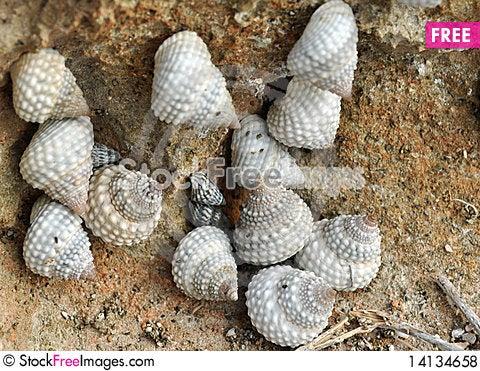 Free Seashells Near The Coast Royalty Free Stock Photos - 14134658